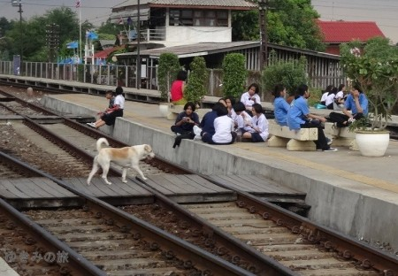 ayutthaya-dog